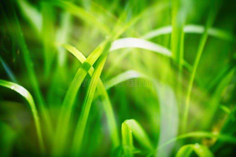 Ανασκόπηση άνοιξης ή καλοκαιριού με την πράσινη χλόη στοκ εικόνες