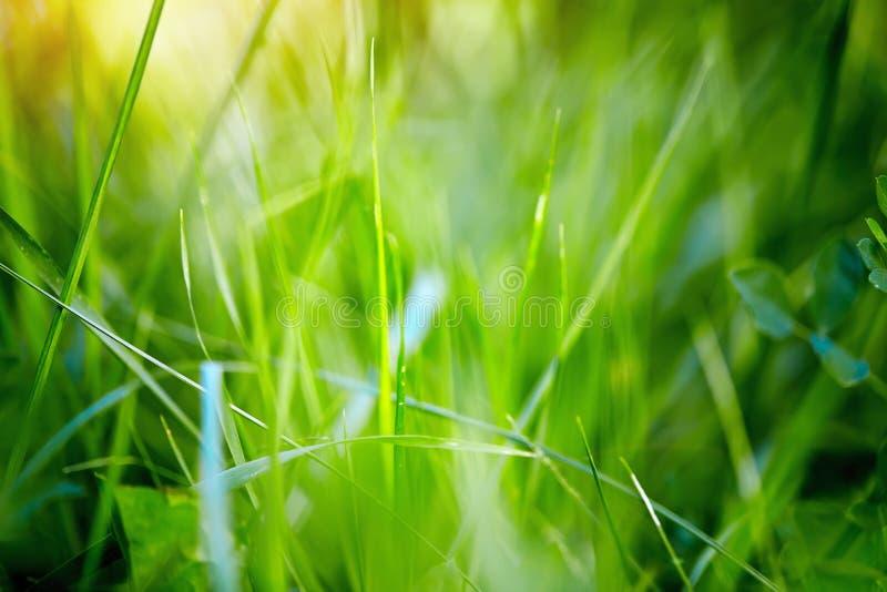 Ανασκόπηση άνοιξη με την πράσινη χλόη στοκ εικόνα