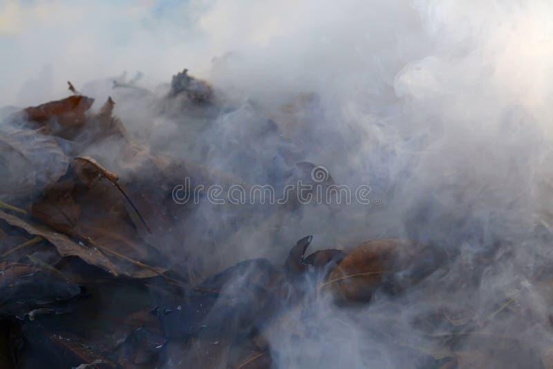 Ανασκόπηση καπνού στοκ εικόνες
