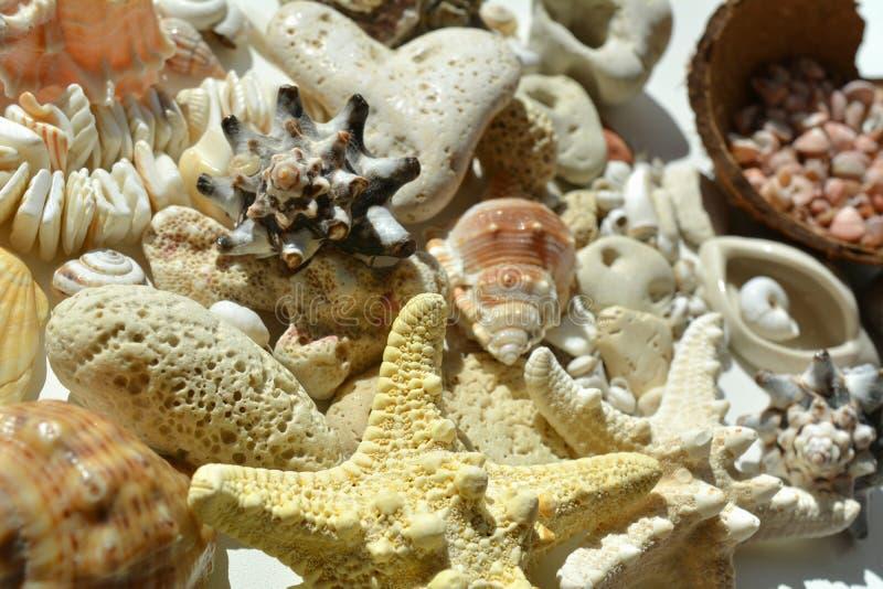 Ανασκόπηση κοχυλιών θάλασσας στοκ φωτογραφίες με δικαίωμα ελεύθερης χρήσης