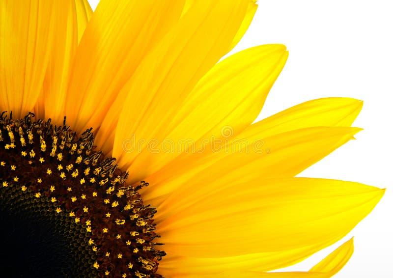 Ανασκόπηση λουλουδιών ήλιων στοκ εικόνα