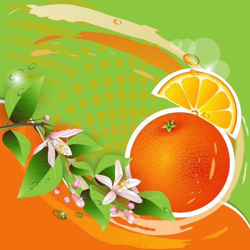 Ανασκόπηση με το φρέσκο πορτοκάλι ελεύθερη απεικόνιση δικαιώματος