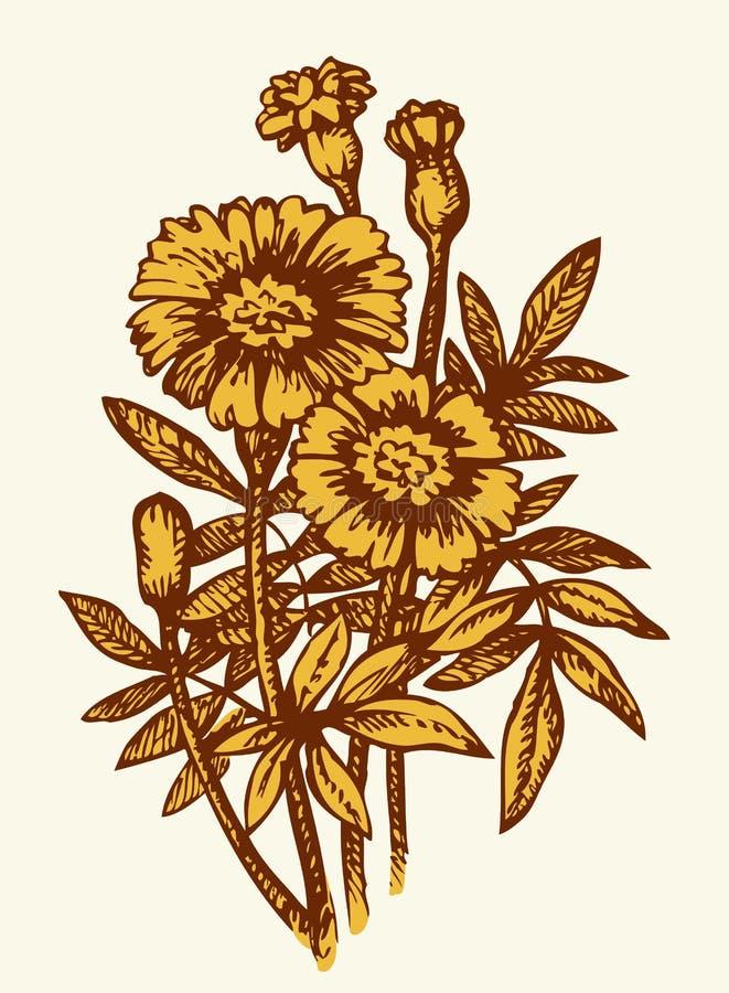 ανασκόπηση που σύρει το floral διάνυσμα χλόης Φωτεινό κίτρινο άνθισμα Tagetes διανυσματική απεικόνιση