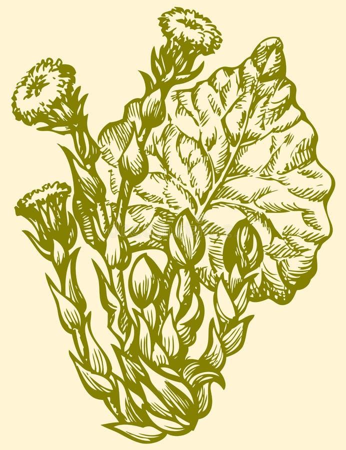 ανασκόπηση που σύρει το floral διάνυσμα χλόης Primroses Coltsfoot άνοιξη (Tussilago Farfara) διανυσματική απεικόνιση