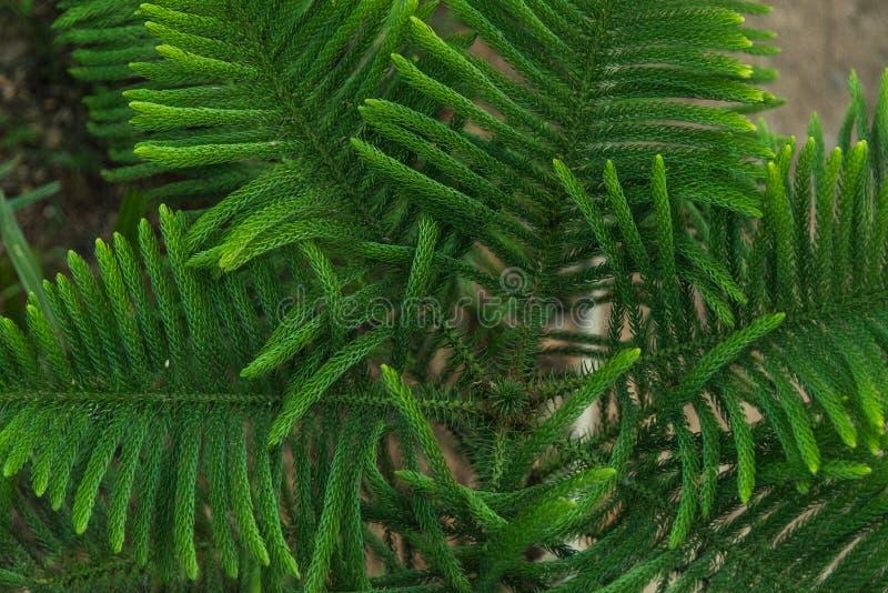 Ανασκόπηση του πράσινου φύλλου στοκ φωτογραφίες με δικαίωμα ελεύθερης χρήσης