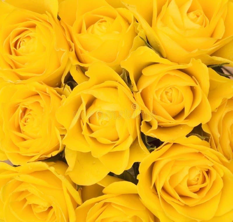 Ανασκόπηση των κίτρινων τριαντάφυλλων στοκ εικόνες