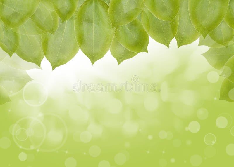 Ανασκόπηση των πράσινων φύλλων, του καλοκαιριού ή της άνοιξης ελεύθερη απεικόνιση δικαιώματος