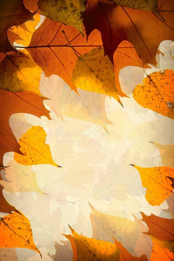 Ανασκόπηση φύλλων φθινοπώρου στοκ εικόνες