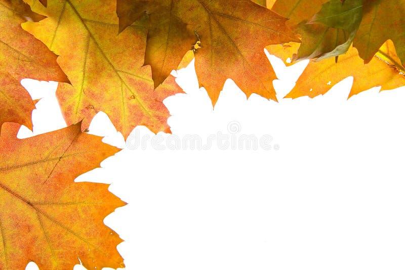Ανασκόπηση φύλλων φθινοπώρου στοκ φωτογραφία με δικαίωμα ελεύθερης χρήσης