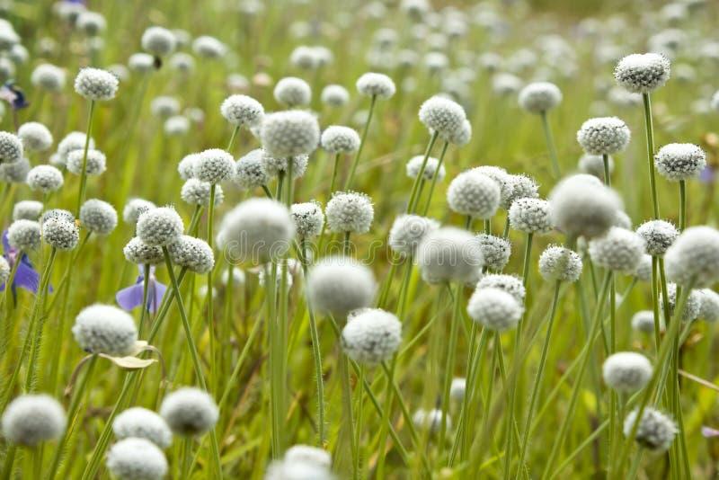 ανασκόπηση floral στοκ εικόνα με δικαίωμα ελεύθερης χρήσης