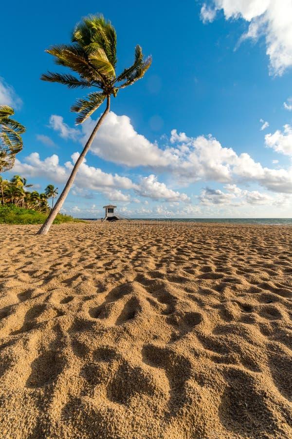 Ανατολή πέρα από το φοίνικα στην παραλία Las Olas, Fort Lauderdale, Φλώριδα, Ηνωμένες Πολιτείες της Αμερικής στοκ εικόνες με δικαίωμα ελεύθερης χρήσης