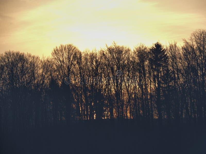 Ανατολή πίσω από τα δέντρα και το λόφο στοκ εικόνες με δικαίωμα ελεύθερης χρήσης