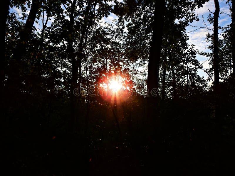 Ανατολή σε μια προαστιακή δασική Πολωνία στοκ εικόνες με δικαίωμα ελεύθερης χρήσης