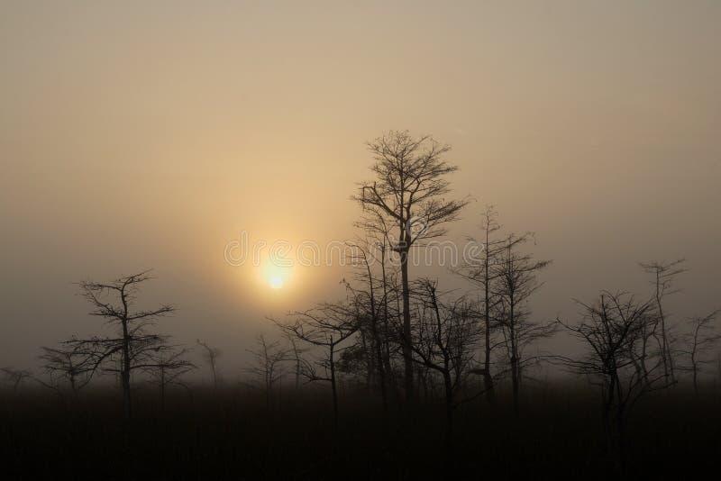 Ανατολή στο νάνο δάσος κυπαρισσιών στο εθνικό πάρκο Everglades, Φλώριδα στοκ φωτογραφίες με δικαίωμα ελεύθερης χρήσης