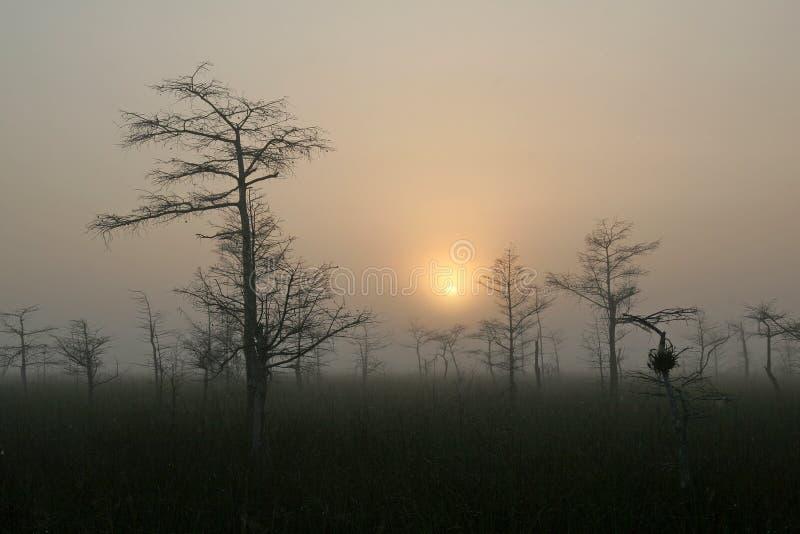 Ανατολή στο νάνο δάσος κυπαρισσιών στο εθνικό πάρκο Everglades, Φλώριδα στοκ φωτογραφία με δικαίωμα ελεύθερης χρήσης