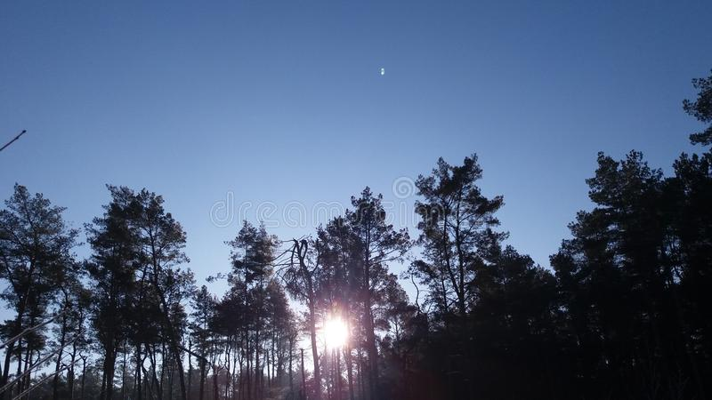 Ανατολή στο χειμερινό δάσος στοκ φωτογραφία