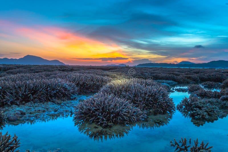 ανατολή τοπίου επάνω από την κοραλλιογενή ύφαλο Η κοραλλιογενής ύφαλος προκύπτει από το νερό σε μειωμένη στάθμη ύδατος στοκ εικόνα με δικαίωμα ελεύθερης χρήσης