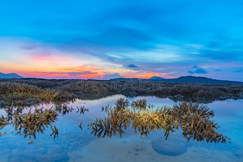 ανατολή τοπίου επάνω από την κοραλλιογενή ύφαλο Η κοραλλιογενής ύφαλος προκύπτει από το νερό σε μειωμένη στάθμη ύδατος στοκ φωτογραφία