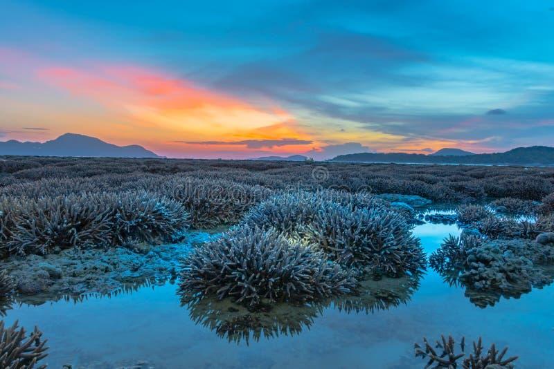 ανατολή τοπίου επάνω από την κοραλλιογενή ύφαλο Η κοραλλιογενής ύφαλος προκύπτει από το νερό σε μειωμένη στάθμη ύδατος στοκ εικόνα