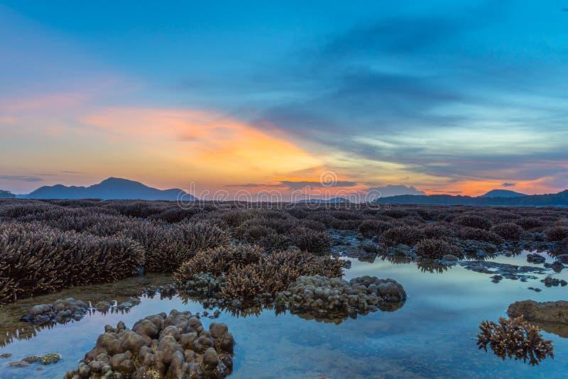ανατολή τοπίου επάνω από την κοραλλιογενή ύφαλο Η κοραλλιογενής ύφαλος προκύπτει από το νερό σε μειωμένη στάθμη ύδατος στοκ εικόνες με δικαίωμα ελεύθερης χρήσης