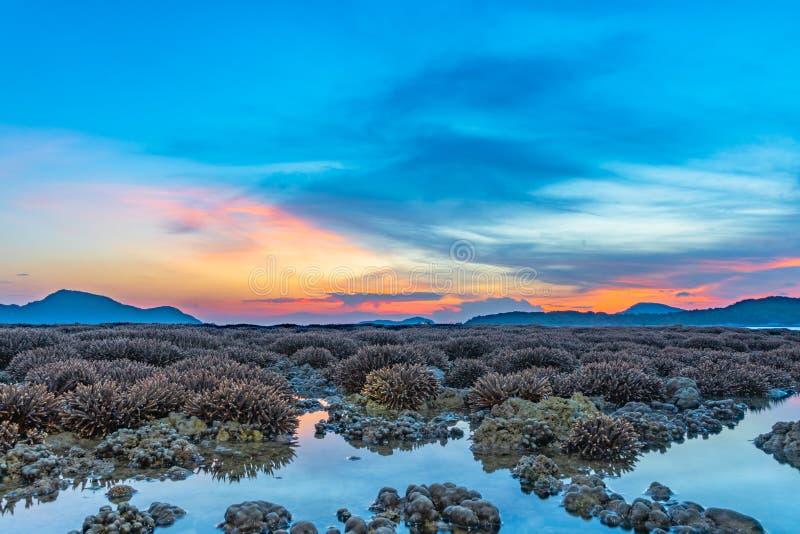 ανατολή τοπίου επάνω από την κοραλλιογενή ύφαλο Η κοραλλιογενής ύφαλος προκύπτει από το νερό σε μειωμένη στάθμη ύδατος στοκ εικόνες