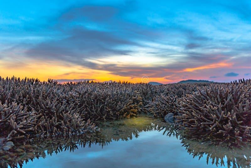 ανατολή τοπίου επάνω από την κοραλλιογενή ύφαλο Η κοραλλιογενής ύφαλος προκύπτει από το νερό σε μειωμένη στάθμη ύδατος στοκ φωτογραφία με δικαίωμα ελεύθερης χρήσης