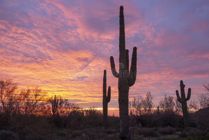 Ανατολή Saguaro στοκ εικόνα με δικαίωμα ελεύθερης χρήσης