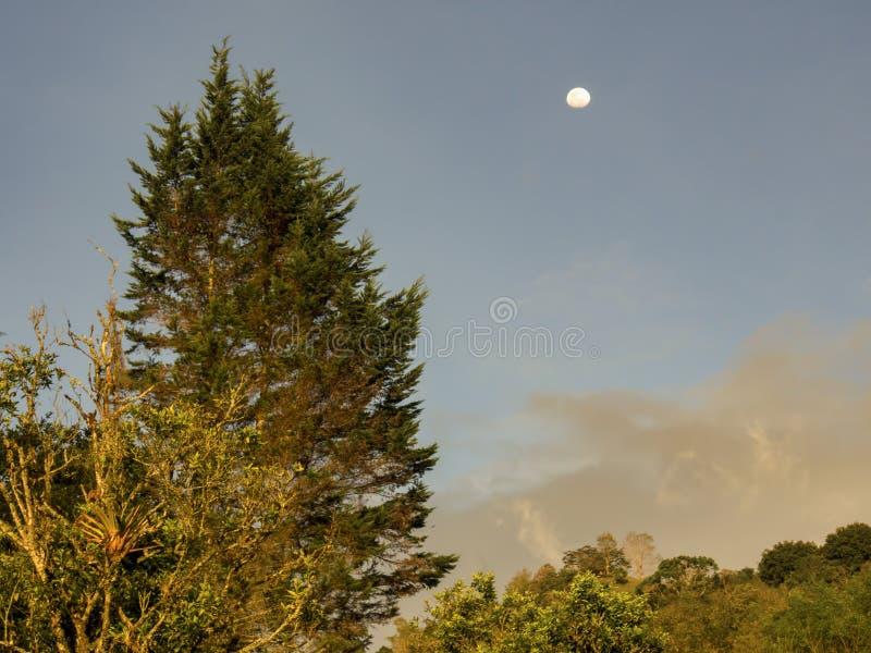 Ανατολική πλευρά του ηλιοβασιλέματος με το φεγγάρι και ένα μεγάλο δέντρο έλατου στοκ εικόνες