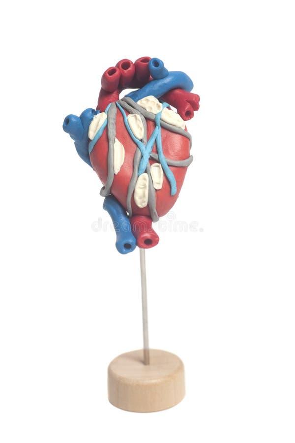 Ανατομία της ανθρώπινης καρδιάς στοκ εικόνα