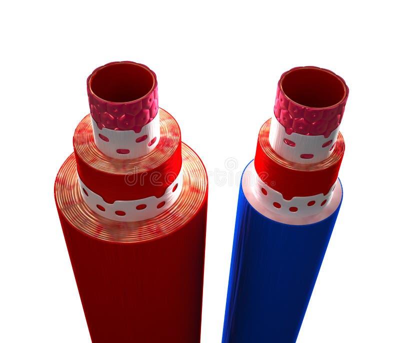 Ανατομία της αρτηρίας και της φλέβας - που απομονώνονται στο λευκό απεικόνιση αποθεμάτων