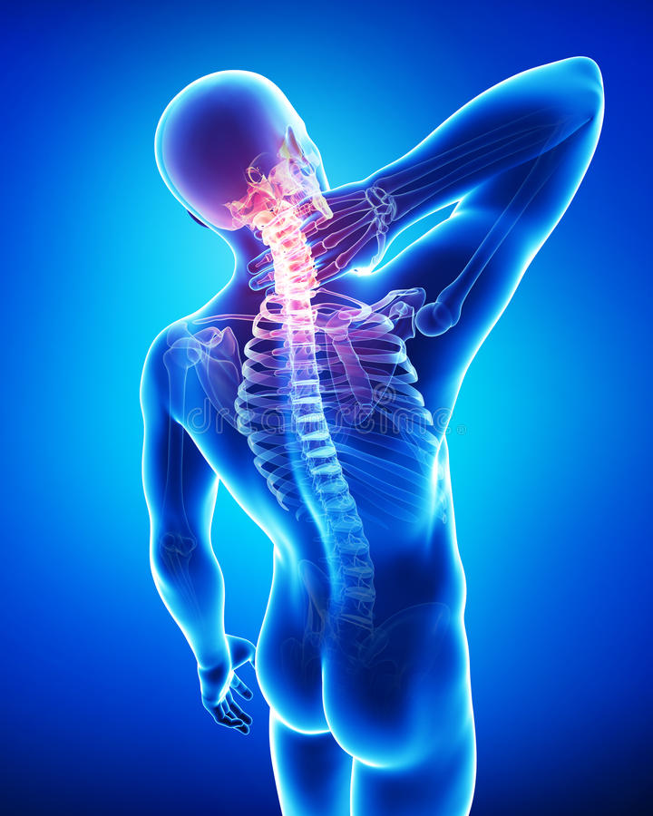 Ανατομία του αρσενικού πόνου λαιμών ελεύθερη απεικόνιση δικαιώματος