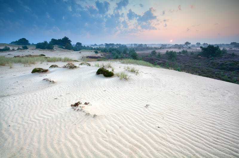 Ανατολή πέρα από τους αμμόλοφους άμμου και την ερείκη στοκ εικόνες