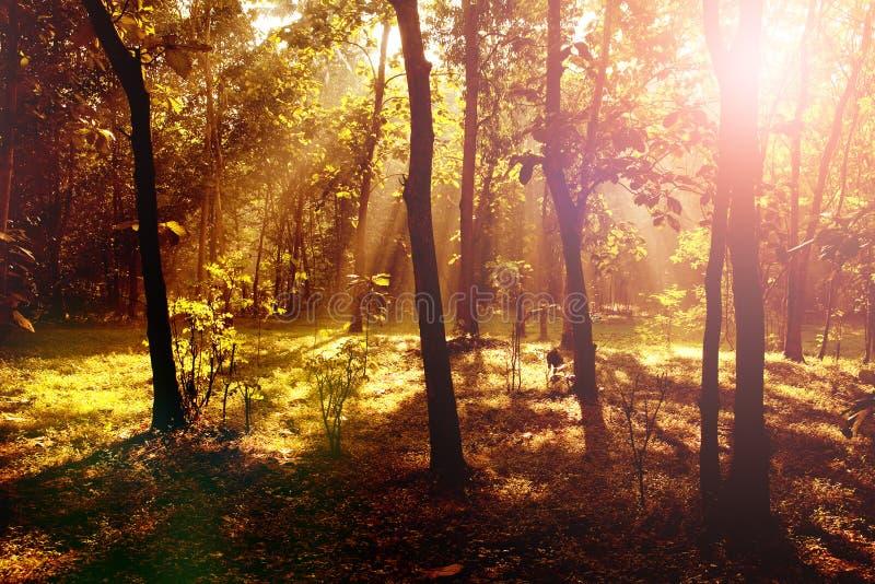 Ανατολή στο δάσος με τους ελαφριούς άξονες και τις σκιές στοκ εικόνες με δικαίωμα ελεύθερης χρήσης