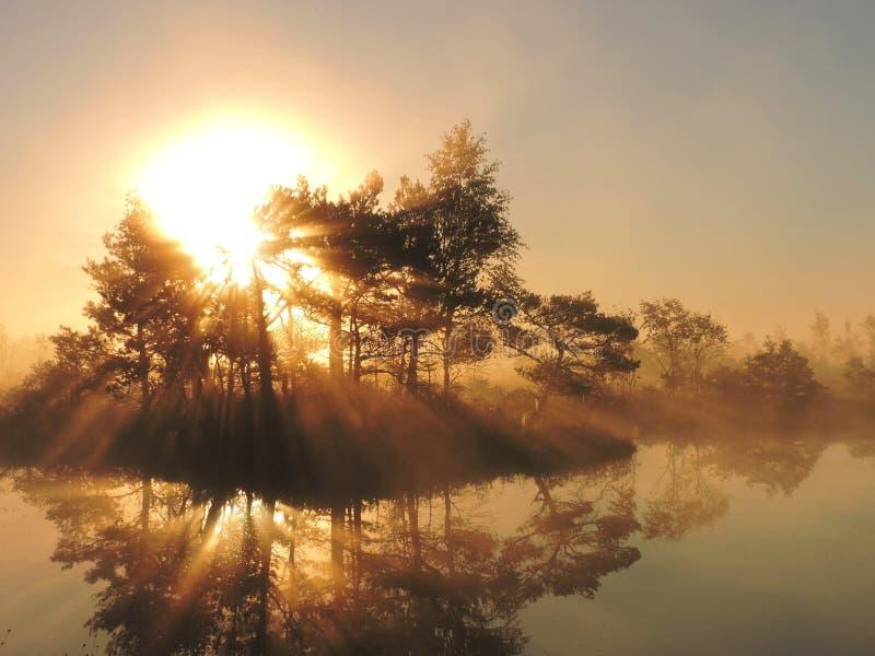 Ανατολή στο έλος, Λιθουανία στοκ φωτογραφία με δικαίωμα ελεύθερης χρήσης