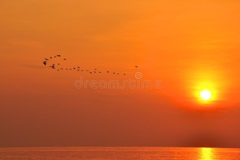 Ανατολή στο πέταγμα θάλασσας και πουλιών στοκ φωτογραφία με δικαίωμα ελεύθερης χρήσης