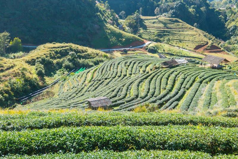 Ανατολή στο doi angkang, Ταϊλάνδη στοκ φωτογραφίες