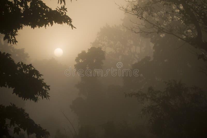 Ανατολή της Misty στο δάσος ζουγκλών στο Νεπάλ στοκ φωτογραφίες με δικαίωμα ελεύθερης χρήσης