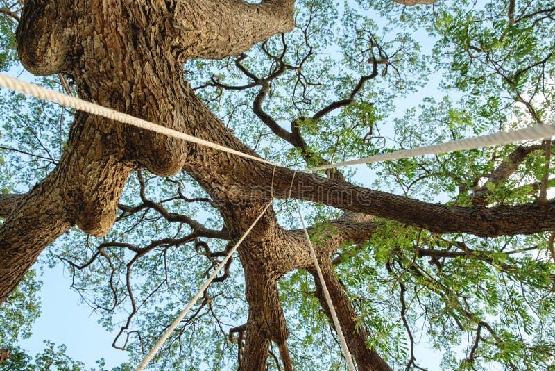 Ανατρέξτε perk δέντρο στοκ φωτογραφίες