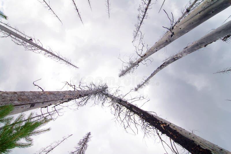 ανατρέχοντας δέντρα στοκ φωτογραφίες