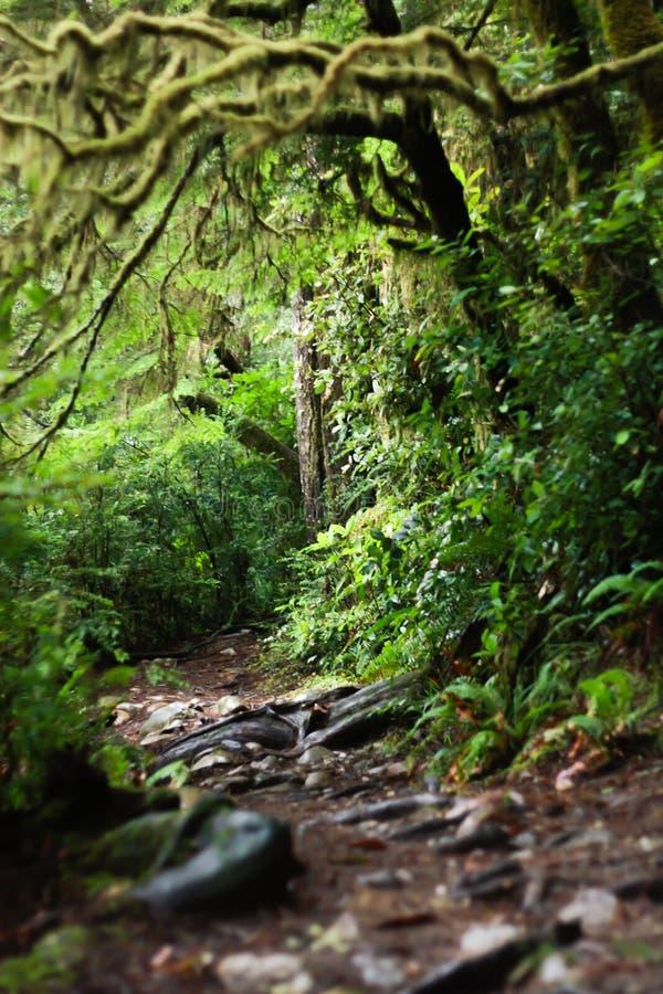 Ανατριχιαστικά crawly ξύλα στο πάρκο Jedidiah Smith Redwood στοκ εικόνες