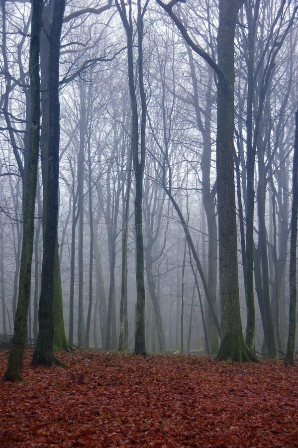 Ανατριχιαστικό μονοπάτι φθινοπώρου στοκ φωτογραφία με δικαίωμα ελεύθερης χρήσης