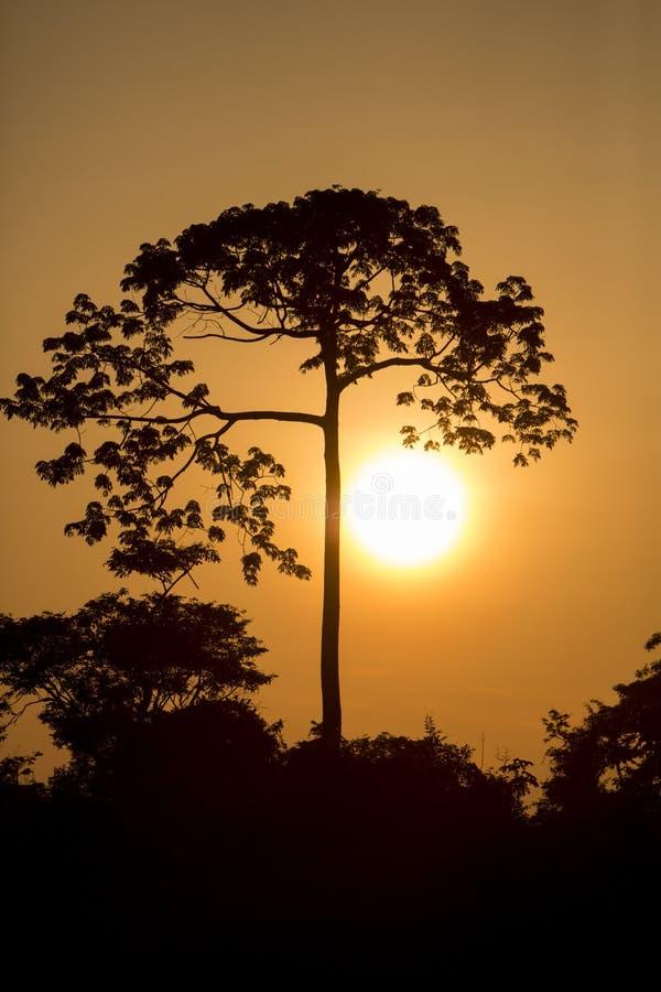 Αναδρομικά φωτισμένος του δέντρου στον ποταμό Catatumbo κοντά στη λίμνη του Μαρακαΐμπο στοκ φωτογραφίες