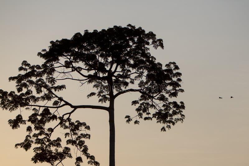 Αναδρομικά φωτισμένος του δέντρου στον ποταμό Catatumbo κοντά στη λίμνη του Μαρακαΐμπο στοκ εικόνα με δικαίωμα ελεύθερης χρήσης
