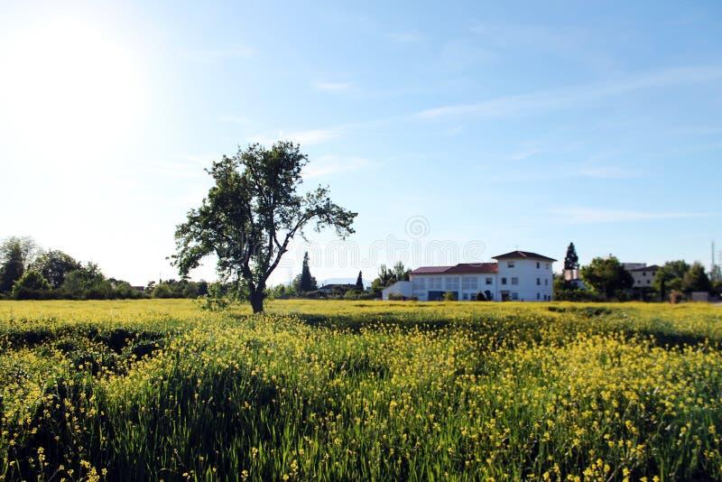 ανδαλουσιακό farmhouse στοκ φωτογραφία με δικαίωμα ελεύθερης χρήσης