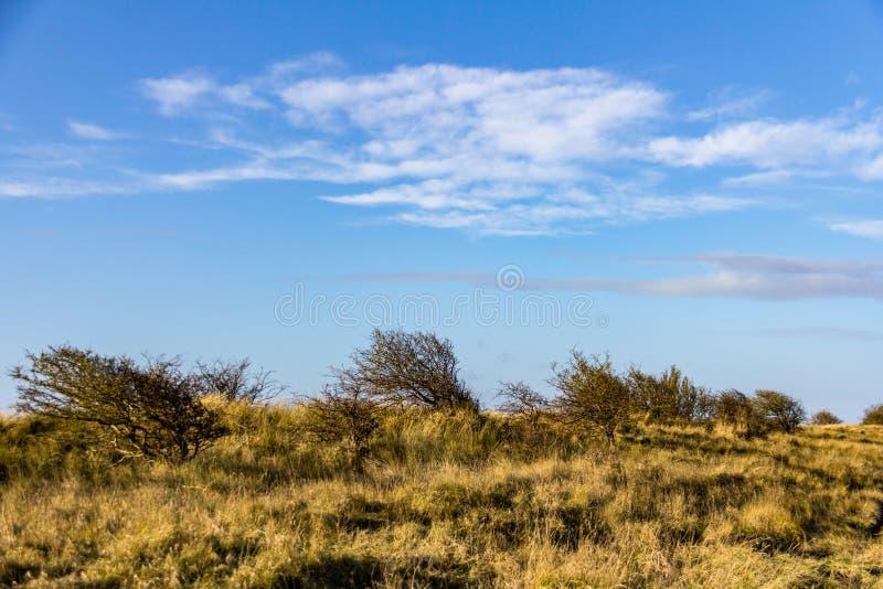 Ανεμοδαρμένα χλόη και δέντρα κοντά στην επιφύλαξη φύσης γωνιών της Donna στοκ φωτογραφία
