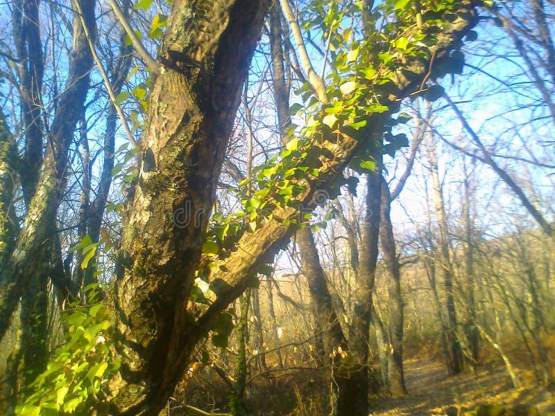 Ανερχόμενος δέντρο στοκ φωτογραφία με δικαίωμα ελεύθερης χρήσης
