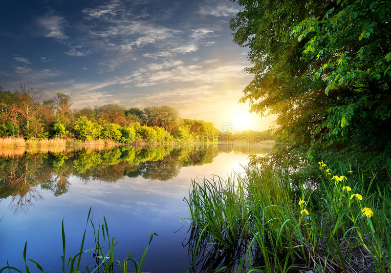 Ανθίζει κοντά στον ποταμό στοκ φωτογραφία με δικαίωμα ελεύθερης χρήσης