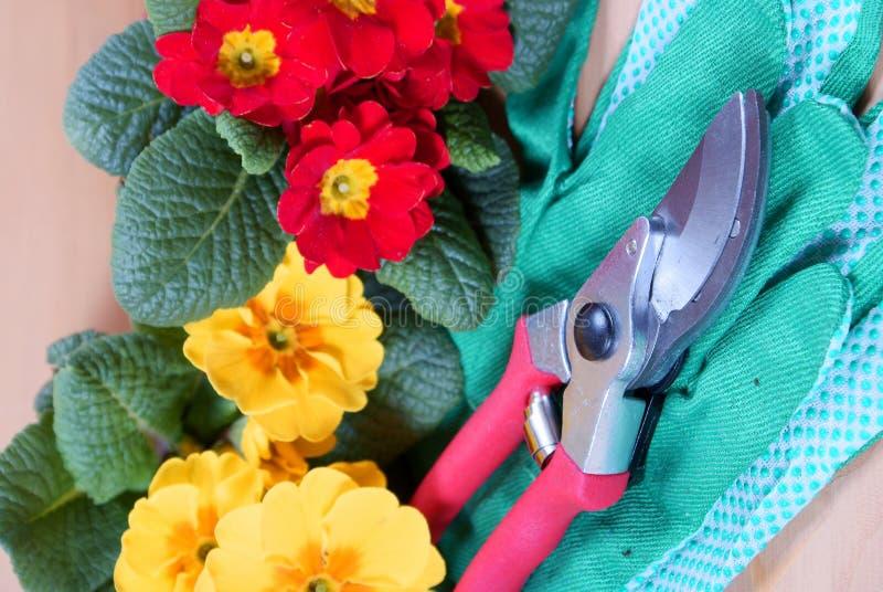 ανθίζει τα εργαλεία κηπουρικής στοκ φωτογραφία