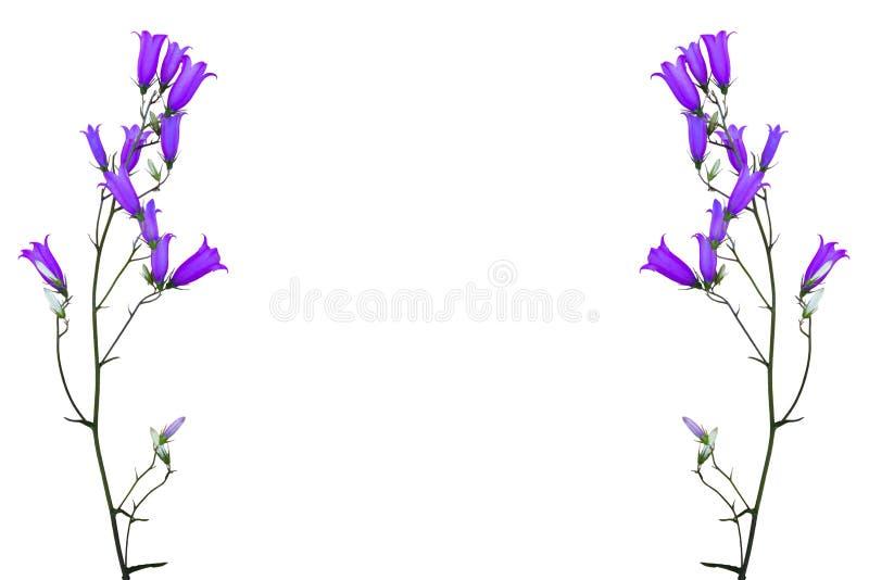 Ανθίζει bluebells στοκ φωτογραφία με δικαίωμα ελεύθερης χρήσης