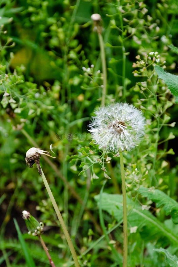 Ανθίζοντας άγρια λουλούδια σε μια πράσινη χλόη στοκ εικόνα